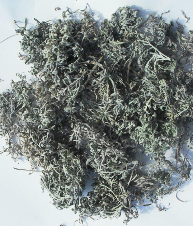 Assenzio selvatico (Artemisia Vulgaris) secco intero