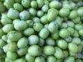 Olive (Olea Europaea) pronte per il frantoio