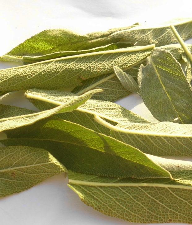 Salvia (Salvia Officinalis) foglia fresca