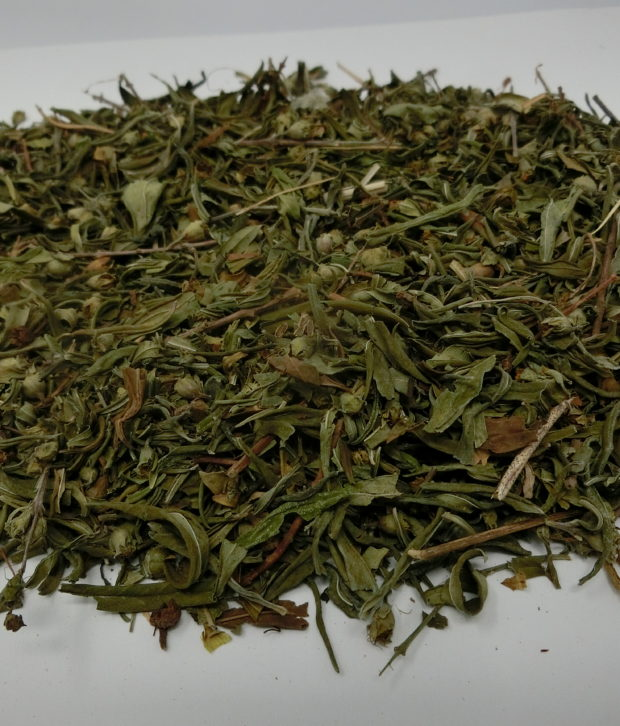 Sinicuichi (Heimia salicofolia) intero