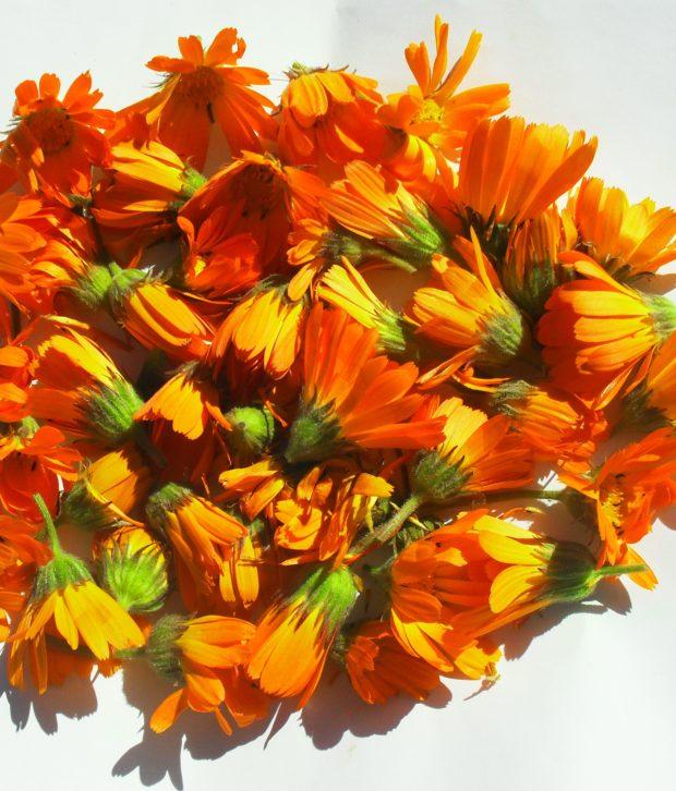 Calendula selvatica (Calendula Arvensis) fiori freschi