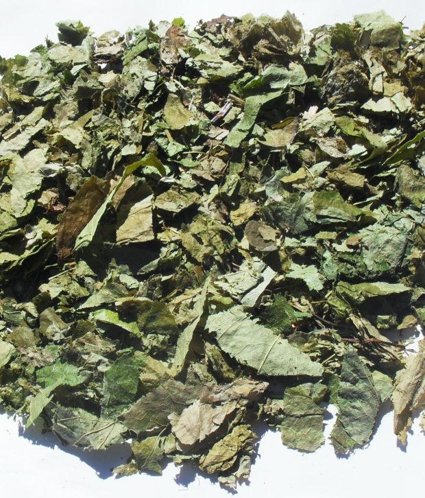 Erba di capra (Epimedium Grandiflorum) secca tagliata