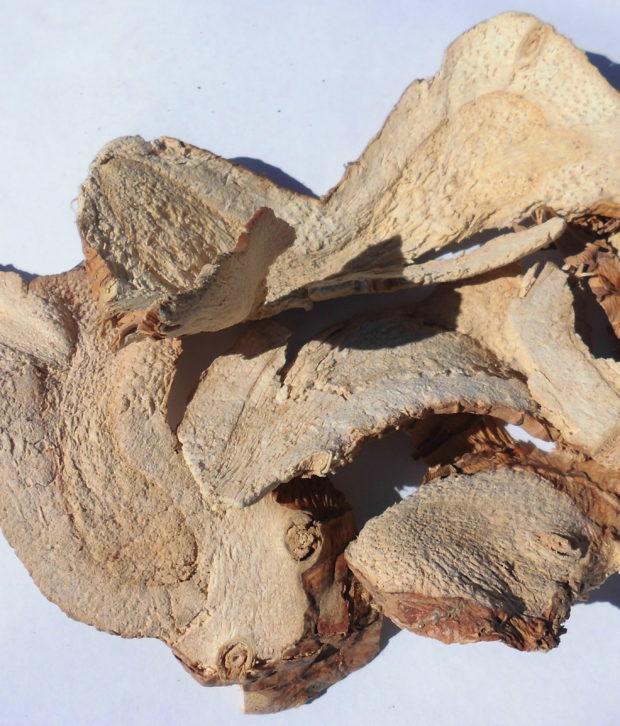 Galanga (Alpinia Galanga) tagliata