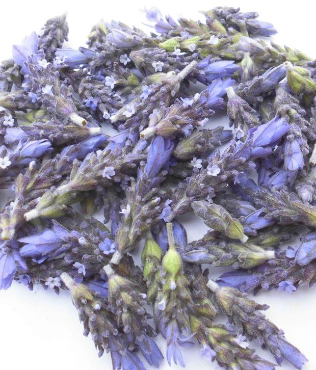 Lavanda (Lavandula Officinalis) fresca