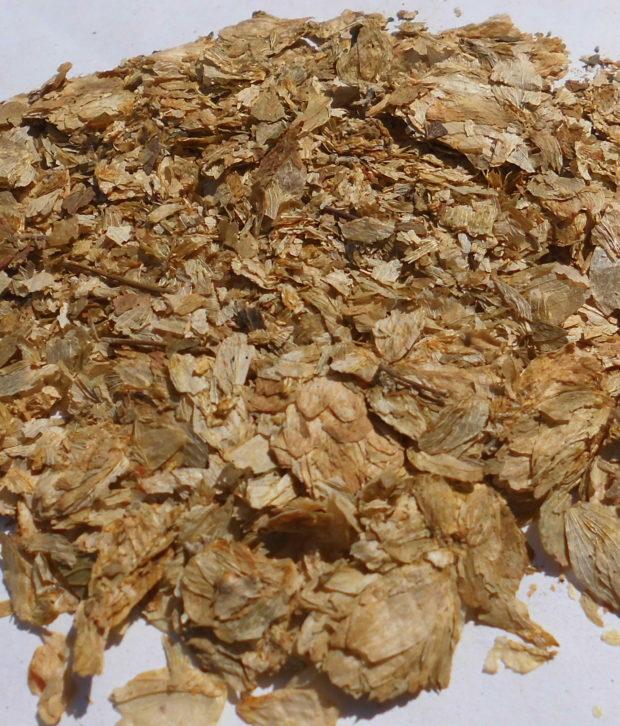 Luppolo (Humulus Lupulus) tagliato