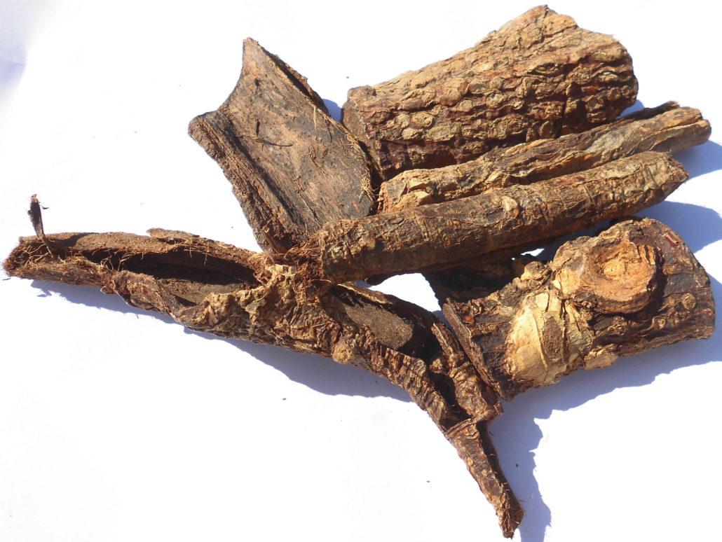 Mulungu ed altre Erythrina sp.