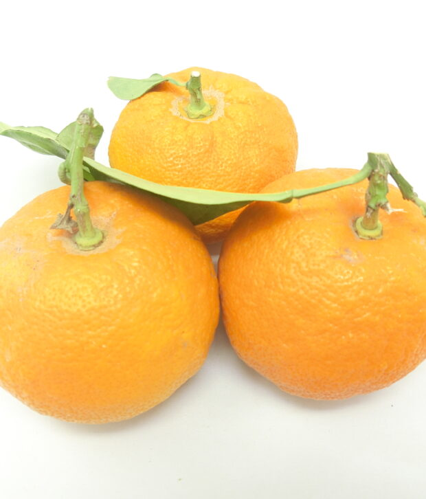 Arancia amara (Citrus aurantium) frutto fresco