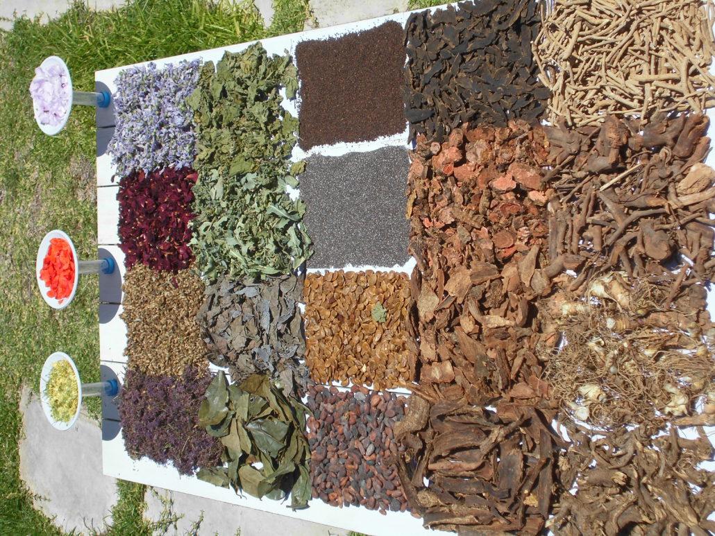 La superiorità delle erbe grezze rispetto ai preparati