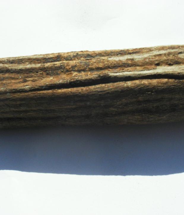 Ayahuasca nera (Alicia anisopetala) intera