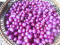 Syzygium bacche in cestino
