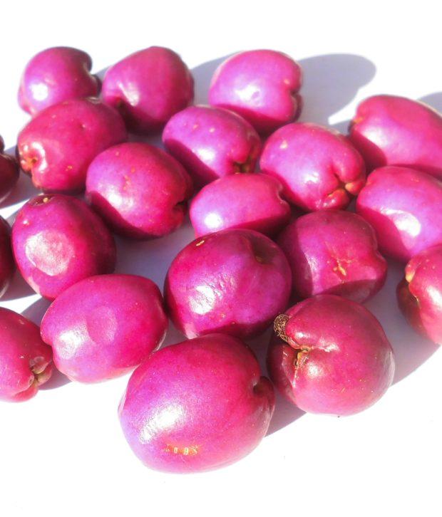 ciliegio magenta (Syzygium australe) bacche