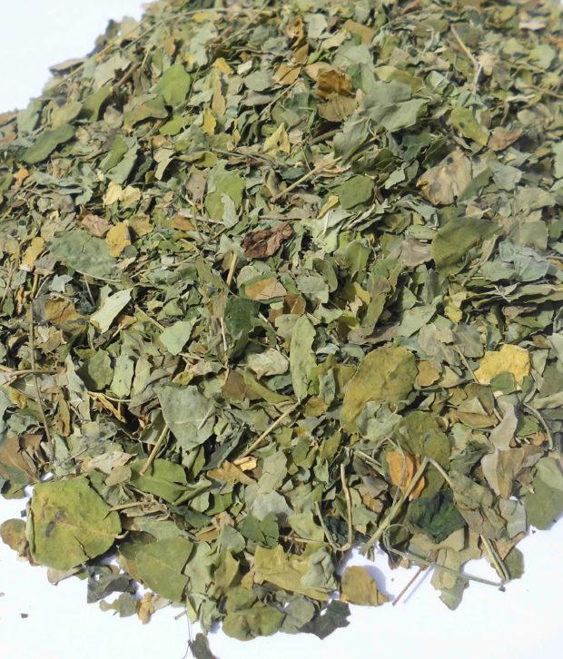 Moringa (Moringa oleifera) foglie intere