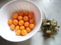 mandragora frutti lavati
