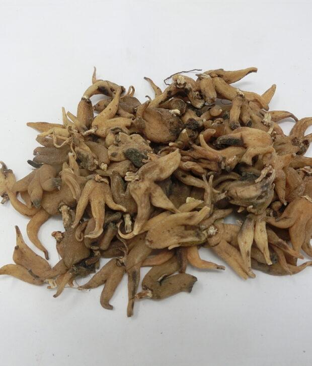 Manina rosea (Gymnadenia conopsea) intera